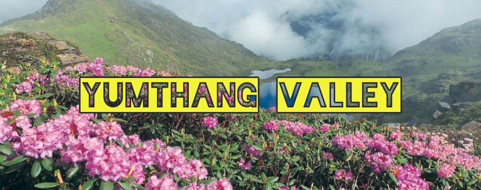 Yumthang valley - The valley of flowers
