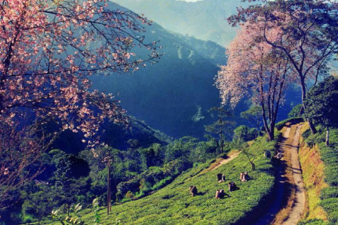 6 Days Honeymoon Tour in Sikkim and Darjeeling